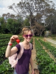 strawberry picking adelaide