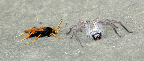 wasp vs spider 2