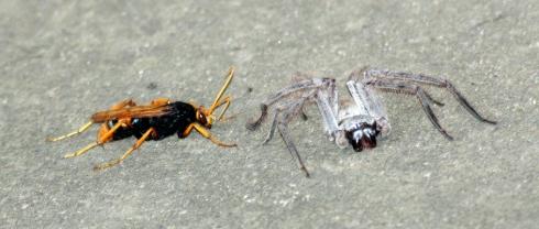 wasp vs spider 2