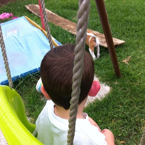 Daniel's freakishly swollen right ear.  I tried to get a photo of the front and side of the ear, but he moved his head too much. So sticking him in the swing and taking it from the back as he watched Rosie