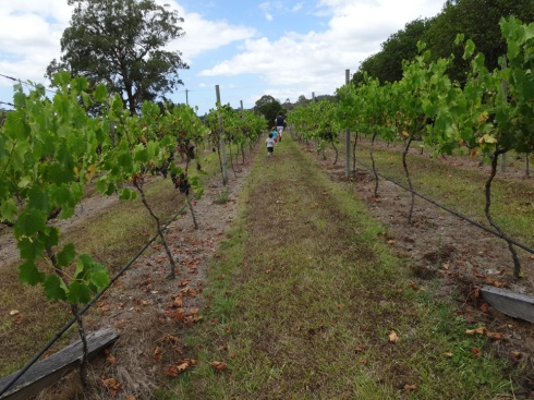 Aaron and the kids running between rows of grapes in a vineyard