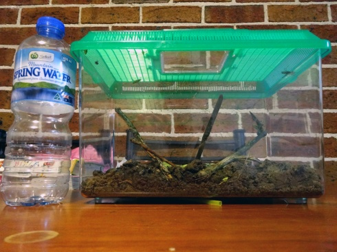 The new bug cage, with a standard 600mL water bottle for size reference