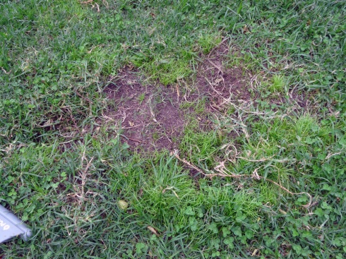 One of the lawn holes.  Aaron tried to plant grass seeds in it after filling it up, but that didn't last very long.